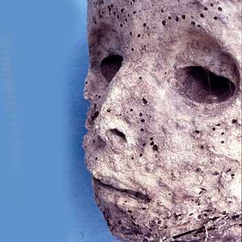 Mummiologia